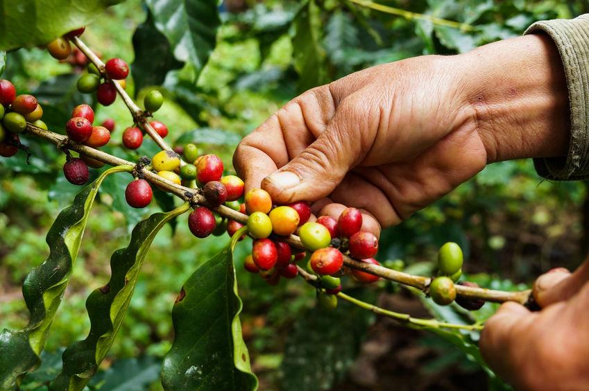 A Dallmayr kávék termőterületei