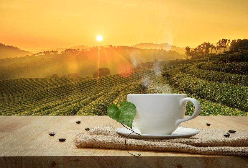 Bio szemes kávé: mitől bio?