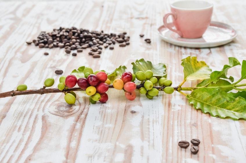 Minőségi szemes kávé: a Dallmayr minőségről